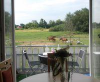 Bild 6: Fewo am Wieker Bodden 80m zum Wasser, WLAN,Terrasse, Garten, Fahrräder.