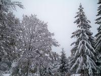 Einen Wintertraum im bayerischen Wald erleben, besuchen Sie uns einfach - Bild 15: Pension Fernblick - Urlaub mit Herz im bayerischen Wald
