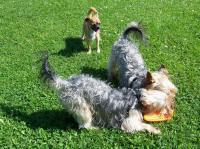 Bild 18: Ostseeurlaub mit Hund - Wassergrundstück Piratennest Darß