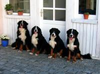 Bild 6: Landhaus Bodensee in Panormasichtlage Hunde willkommen, Wohnung 1