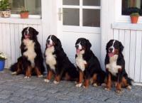 Bild 6: Landhaus Bodensee in Panormasichtlage Hunde sind herzlich willkommen. WOHNUNG 3