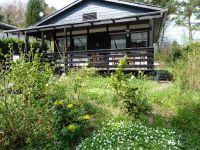 Waldblumen im Vorgarten des Ferienhauses im Mai - Bild 15: Eifel-Ferienhaus Fliegenpilz - für Ihren Urlaub mit und ohne Hund
