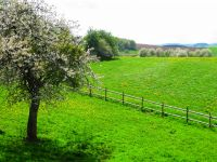 Unser Anwesen ist rundherum von Wiesen umgeben. - Bild 12: Eifelferienwohnung Zangerle, Ferien in der schönen Westeifel
