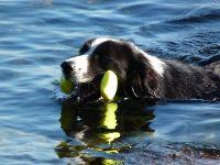 Bild 3: Böhrs Hoff Fehmarn für Ihren Urlaub mit Hund