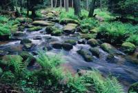 Bild 15: Schöne Ferienwohnung im Naturpark Oberpfälzer Wald! Gerne mit Hund(en)!
