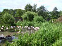 muss man gesehen haben- ein wunderschön angelegter Tierpark - Bild 18: Fewo bis 4 Personen - mit kostenlosem Schwimmbad in Timmendorfer Strand