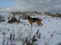Bild 42: Schicke Fewo an der Nordseeküste-Ostfriesland