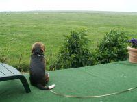 Unser Beagle Baxter - Bild 9: Grüne Urlaubs-Insel im Wattenmeer *** Radmokerhus Pellworm