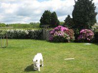 """Über 1000 qm Grundstück. Für Hunde eingezäunt plus Hecke rundherum. Wir haben selber 2 große Hunde, wovon der eine ein """"erfindungsreicher Ausbrecher"""" ist. Der testet unsere Grundstücke auf Ausbruchsicherheit! ;-) - Bild 3: Top-Haus, Ostsee, Lübecker Bucht, Meerblick Hunde"""