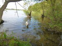 10 Minuten Fußweg zum Schmachter See - Bild 15: Kinder- u. hundefeundliches Ferienhaus in Binz, hell u. modern, mit Garten