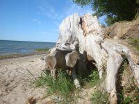 Der Strand - Bild 18: Ferienhaus Ostsee (Wohlenberger Wiek) nähe Boltenhagen