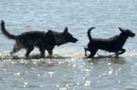 Thimo sucht Freundin - Bild 18: Huus-Thimo an der Nordseeküste - Hunde willkommen - rauchen erlaubt - WLAN