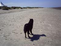 Hundestrand in Schillig - Bild 6: Heini's Huus 1 - Ferien mit Hund an der Nordsee