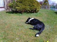 Bild 3: Haus Heidemarie mit eingezäunten Garten, Nordseeküste für Urlaub mit Hund