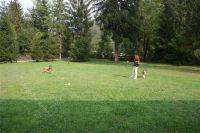 hier hat man genügend Platz zum Frisby spielen oder toben - Bild 18: Villa Nini mit eingezäunten Garten am Ledrosee für Urlaub mit dem Hund