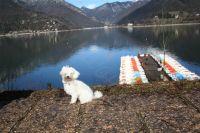 Bild 12: hundefreundliche Fewo Seeblick mit eigenem eingez. Garten+Pool am Ledrosee