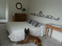 Bild 6: Villa Rosemarie mit traumhaften Blick über Ledrosee für Urlaub mit dem Hund