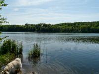 """Bild 30: Ferienhaus """"Ostseetraum""""Urlaub mit Hund an der Ostsee 1,60m hoch eingezäunt"""