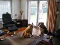 """Unsere Hunde Leines (Bobtail) und Emmily (Elohündin) - Bild 12: Ferienhaus """"Ostseetraum""""Urlaub mit Hund an der Ostsee 1,60m hoch eingezäunt"""