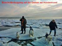 """Bild 33: Ferienhaus """"Ostseetraum""""Urlaub mit Hund an der Ostsee 1,60m hoch eingezäunt"""