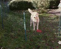 ...steht zum Abstecken eines kleinen Areals im Garten zur Verfügung - Bild 15: Ferienwohnung Søstjern für 2 - 3 Personen & Hund, Schwimmbad und Sauna