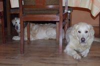 Müde vom Spaziergang zum Leuchtturm - Bild 15: Hundefreundliches Ferienhaus im schönen Ostseebad Prerow