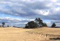 Ein natürlicher Sandflug auf den Veluwe, das großte Naturgebiet von Niederlande. - Bild 33: Sehr schönes Ferienhaus, jetzt € 50,- Rabatt jedes Wochenende bis Mai