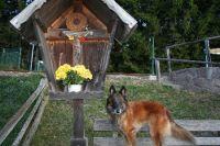 Bild 12: entzückendes Domizil mit eigenem eingezäunem Garten in Südtirol