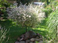 Bild 6: Wieck-Darß Viersternewohnung, große Sonnenterrasse, ruhige naturnahe Lage