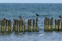 Bild 18: Freistehendes, umzäuntes Reethaus nah am Meer, WLAN-Zugang inkl.