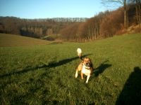 Bild 12: Sonnenhaus Nr. 47a in Weserbergland/Extertal bis 5 Personen-Hund erlaubt-