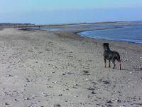Unsere Nelly auf dem Weg zum Hundestrand - Bild 33: Ferienhaus Windrose Fehmarn OT Puttgarden