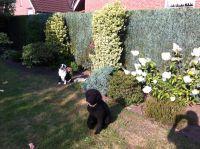 Bild 9: Familienfreundliche Fewo, 2 Schlafzimmer,Garten, Hunde auf Anfrage erlaubt