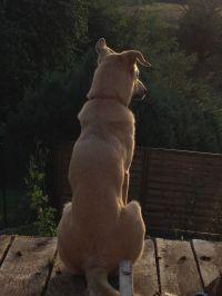 Ihr Hund findet es garantiert schön, man kann in die Ferne blicken oder... - Bild 3: Ferienhaus Zaunkönig Ihr Urlaub mit Hund im Odenwald / Hessen