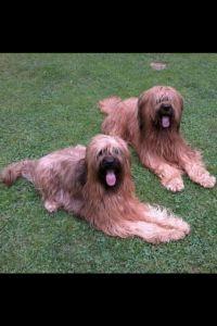 Bonita und Amigo liebe Gäste - Bild 9: Ferienhaus Arnolde mit Hund Nordsee Ostfriesl. Gr.EingezGartenAlleinnutzung