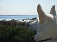"""Hier steht unser """"Wuffi"""" mit den Vorderpfoten auf einem Stuhl und genießt auch den Ausblick. - Bild 3: Ostsee bei Grömitz, Lübecker Bucht, Meersicht, Hunde willkommen"""