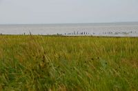 Bild 12: Hooksiel: Fewo KRABBE. Zentral, strandnah, ruhig gelegen. Endlich Urlaub!