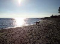 """Bild 12: Chalet """"Nordwind"""" für 2 - 3 Pers. - Ostsee mit Hund - strandnah"""