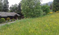 Bild 12: Ferienhaus Woodland Lodge mit eingezäuntem Garten in Winterberg-Niedersfeld