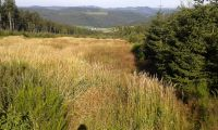 Wanderung zum Clemensberg(838m N.N)Entfernung ca. 3km bis zum Gipfel - Bild 18: Ferienhaus Woodland Lodge mit eingezäuntem Garten in Winterberg-Niedersfeld