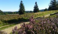 Nahegelegenes Naturschutzgebiet Hochheide läd zum Wandern ein - Bild 18: Ferienhaus Woodland Lodge mit eingezäuntem Garten in Winterberg-Niedersfeld