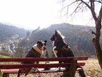 Bild 27: Außergewöhnliche luxuriöse Ferienwohnung im Schwarzwald