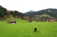 """Wanderwege direkt vom Haus aus erreichbar - Bild 6: Ferienhaus """"Häusl"""" in Pfronten im Allgäu"""
