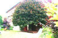 Bild 21: Ferienhaus Gabriela mit eingezäunten Garten und privatem Swimmingpool