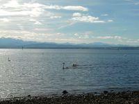 Hintergrund Alpenpanorama - Bild 9: Ferienwohnung Fam. Mehl - mit Panorama-See- und Alpenblick -